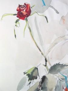 Skizze: Rose