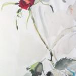 Skizze, Rose